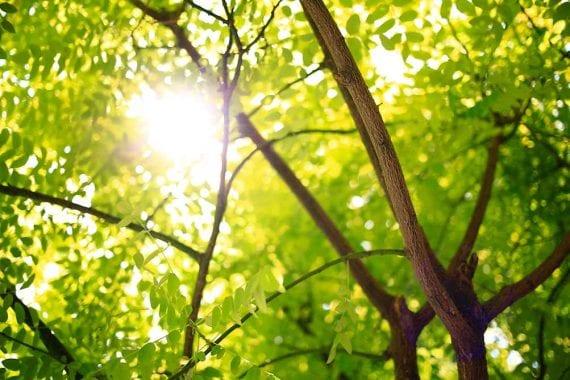 Photo of leafy trees